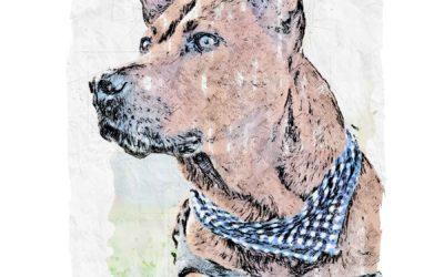 Dog in Kerchief