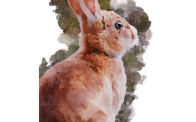 Hare Appointment