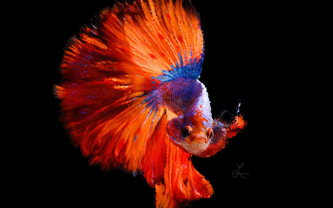 Harvey the Betta Fish