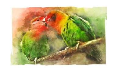 Lovebirds Kiss