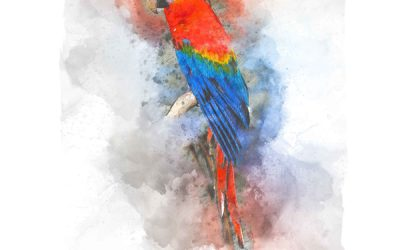 Quickdraw Macaw
