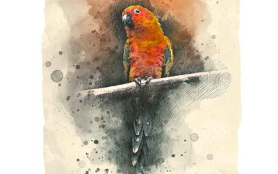 Conure in Conyers