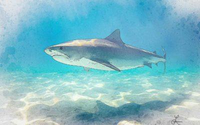 Bull Shark on the Prowl