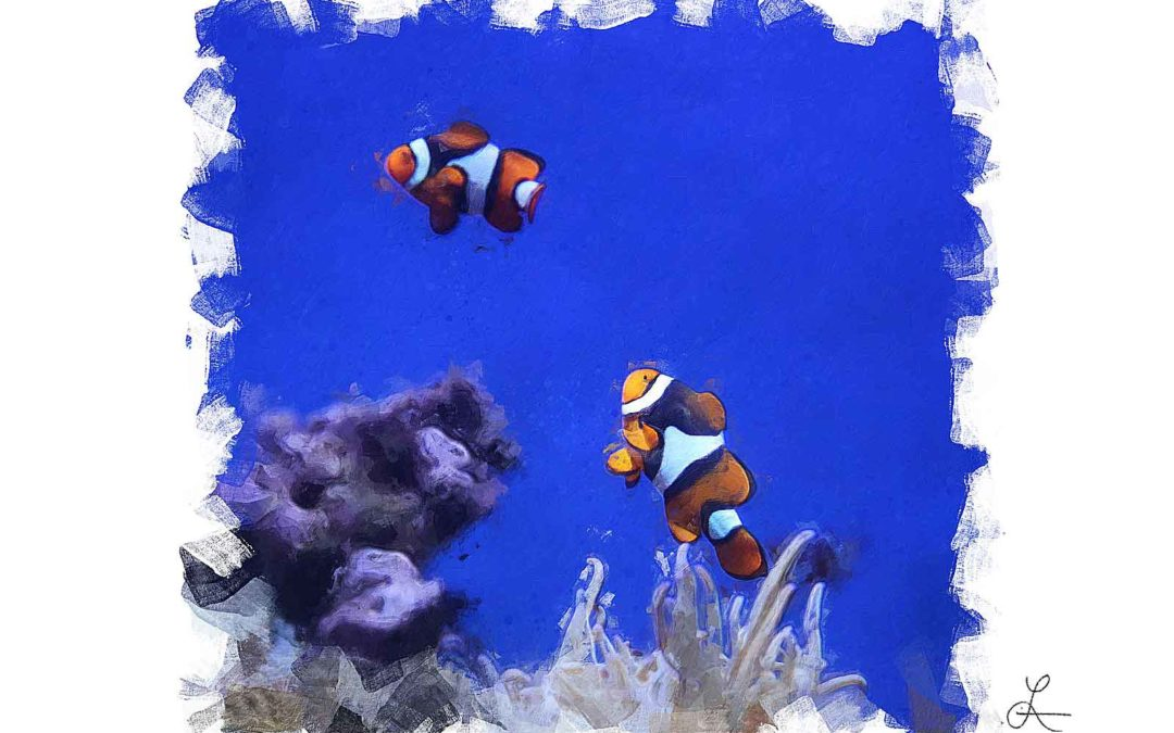 Clownfish Couple